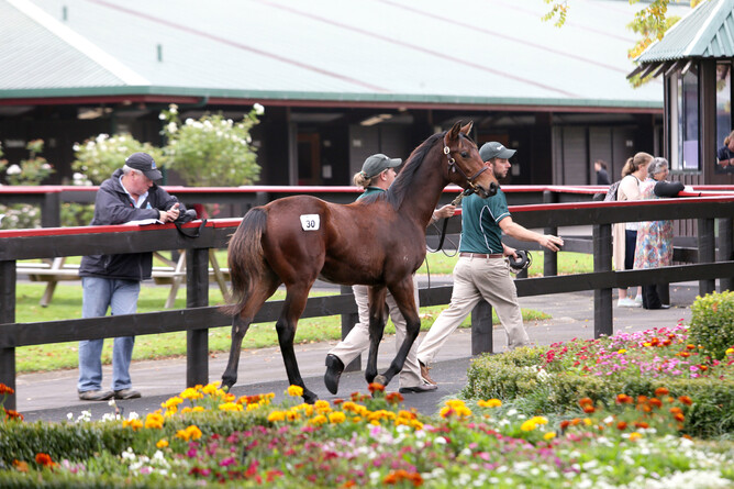 Lot 40 Savabeel x Avisto colt - Photo: Trish Dunell