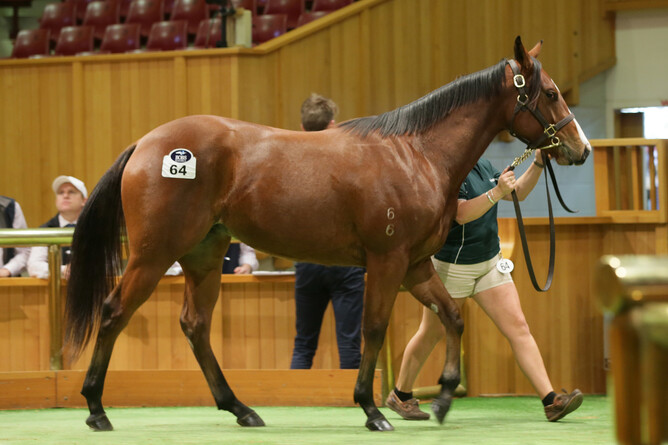 Lot 64 Snitzel x Tip The Wink filly - Trish Dunell
