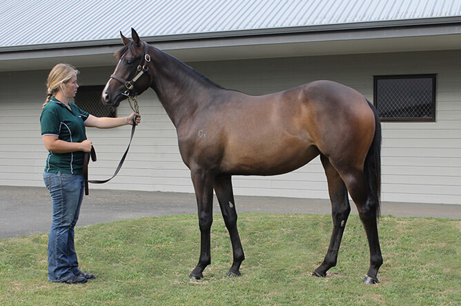 Firebird Flyer pictured with Steph as a yearling. - Photo: Trish Dunell