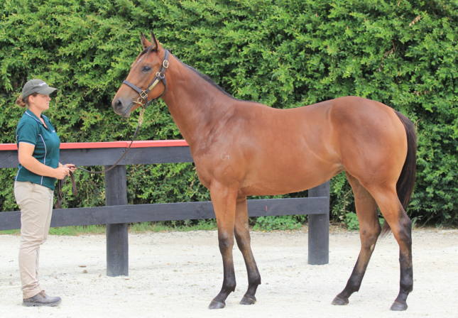 Karaka Book 1 Lot 507 Charm Spirit x Que Sera - Photo: Angelique Bridson