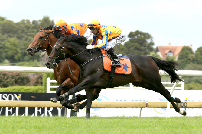 Heroic Valour (inside) and Extravagant (outside) galloping at Ellerslie today - Trish Dunell
