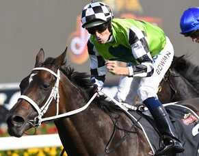 Cox Plate or Caulfield Cup options for Unforgotten