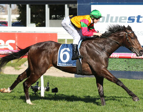 Age of Chivalry salutes at Caulfield