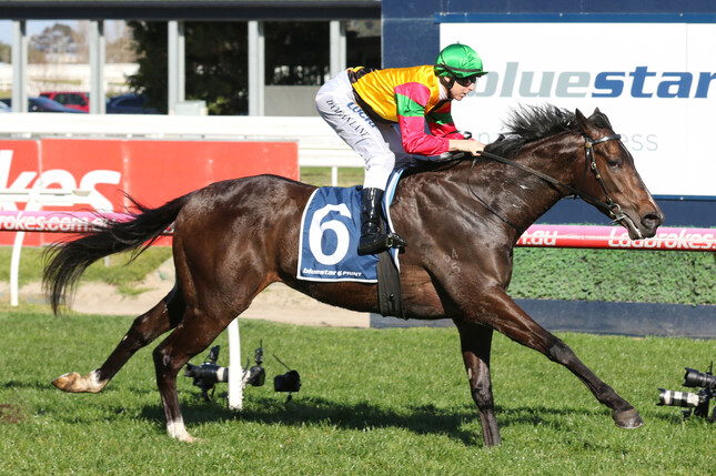 Age of Chivalry notched up career win number three with a front running performance at Caulfield - Bruno Cannatelli