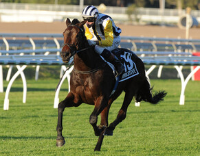 Injury forces retirement of top mare
