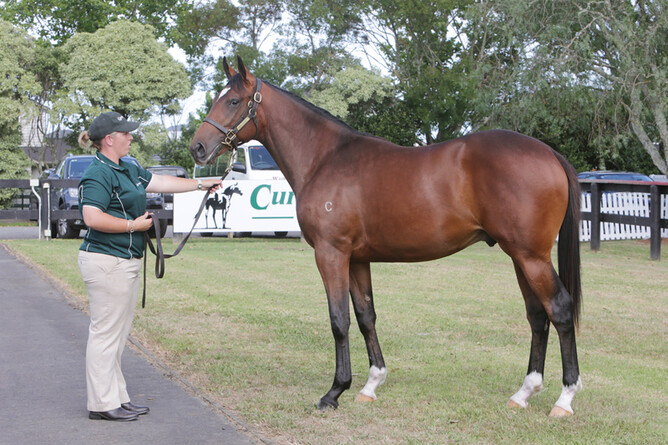 Gorgeous Again pictured as a yearling with Chrissy Bambry - Photo: Trish Dunell