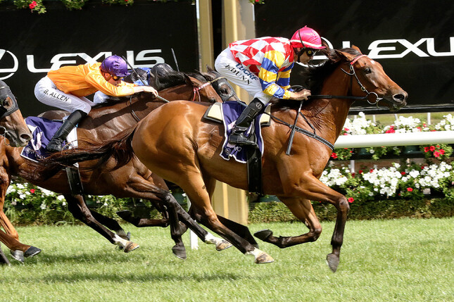 A Queensland campaign is on the cards for Curraghmore graduate Manolo Blahniq - Darryl Sherer