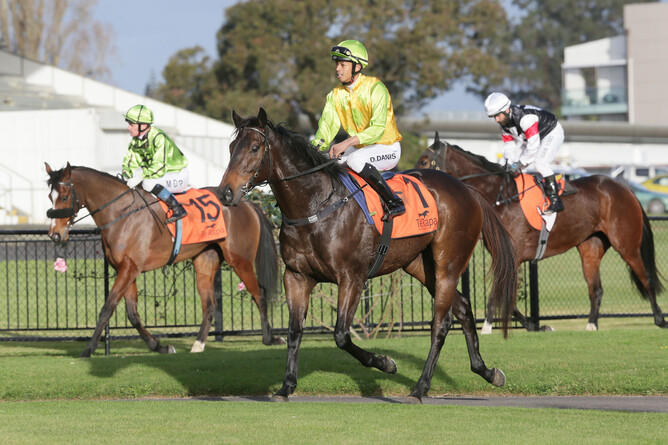 Roc de Bank returns to scale at Te Rapa - Photo: Trish Dunell