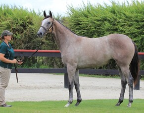Charm Spirit filly heading to Perth